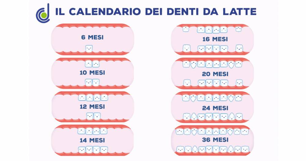 Calendario Dentini.Il Calendario Di Denti Da Latte E Denti Permanenti Quando